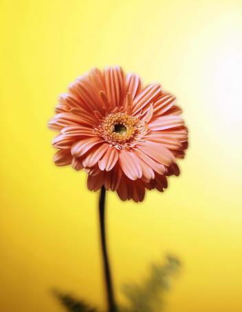 Blume-2.jpg
